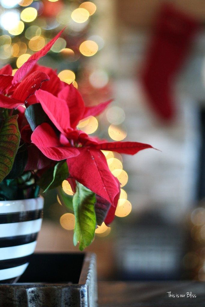 merry bright and blissful holiday home - family room coffee table - striped bowl poinsettia - thisisourbliss.com