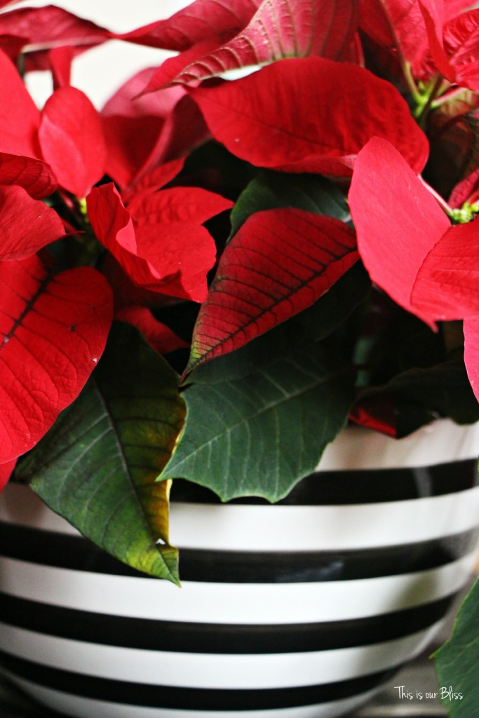 merry bright and blissful holiday home - striped bow poinsettia - thisisourbliss.com